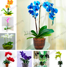 Orchid Flowers Bonsai Phalaenopsis Perennial Potted Plants Garden 100 Pcs Seeds