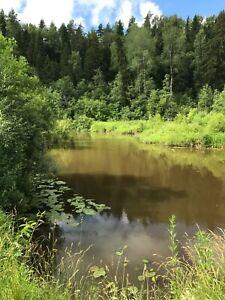 Photo Picture Russia Nature