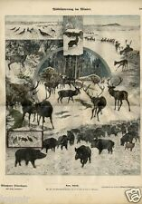 1880= Animali selvaggi in inverno= MUNCHENER BILDERBOGEN= Rara Stampa Antica