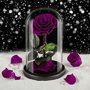 Eterfield Preserved Flower Rose Eternal Rose Forever Flower in Glass Dome Gifts