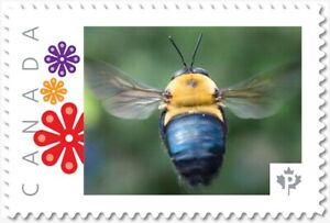 BEE, BUMBLEBEE = Picture Postage Personalized stamp MNH Canada 2018 [p18-06sn03]
