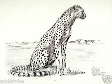 "1973 Alert Cheetah B/W Framable Art Print/Sketch by Ray Harm 11""x15"" L@K!"