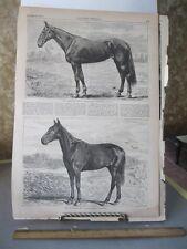 Vintage HORSE Print,AMERICAN GIRL,Mountain Boy,Harpers,1869#2