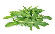 1000 GRAINES BIO DE ROQUETTE SAUVAGE Plantes Herbes Aromatiques
