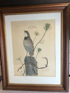 Ray Harm Print Lithograph EASTERN BOB WHITE on Fence post Framed Matted Signed