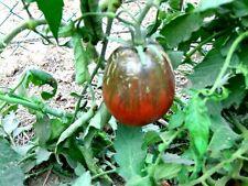 30 graines de tomate COEUR DE BOEUF NOIRE(BIO)