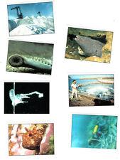 LOT 7 VIGNETTES PANINI LA PLANETE BLEUE n°12-62-105-124-127-169-177