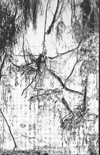Dead Reptile Shrine - Nokturnal Thelema Krusifixion (Fin), MC (Mortiis,Noise)