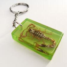 Porte-clés ou bijou de sac insecte SCORPION résine vert cadeau homme garçon noël