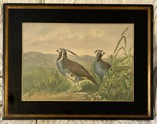 Alexander Pope Jr Antique Lithograph Blue Quail Birds Foster Bros Frame 26X20