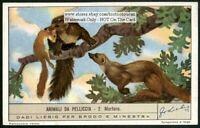 Pine Martin Martora 60+ Y/O Trade Ad Card
