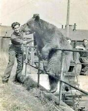 8x10 photo Wojtek (5) 1942-1963 The Polish Soldier Bear in 1945