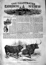 Old Antique Print 1847 Smithfield Club Cattle Show Hereford Ox Highland 19th