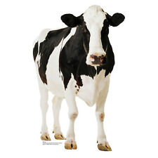 COW Bovine Farm Animal Lifesize CARDBOARD CUTOUT Standee Standup Poster Prop