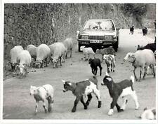 1970 NSU RO80 Wankel RC Rotary & Lamb Sheep Factory Photo u6669-9YPDN6