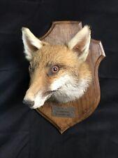 Taxidermie Tête renard naturalisé sur socle bois