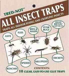 10 pk  ALL INSECT STICKY TRAPS. Fly, Spider, Cricket, Roach Lady  Bug   IN USA