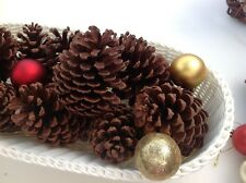 10 Natural pine cones christmas craft  kids craft real pine cones - FREE POSTAGE