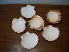 Set of 6 real shell oyster dishes serve ware nautical sea shell