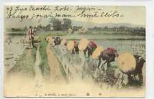 (Gq070-407) Planting a Rice Field, China, Japan c1910 Used VG, No Stamp