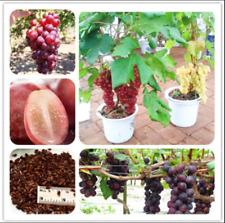 Bonsai Grape 50 Pcs Seeds Organic Fruit Nutrient Rich Vine Plants Tree Garden F