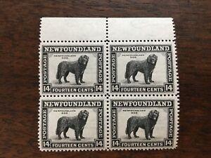 Newfoundland Postage Stamps Vintage Northern Dog Block