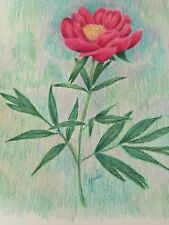 COLORED PENCIL drawing  flowers pink peony