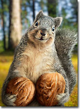 Squirrel Holds Nuts Funny Birthday Card - Greeting Card by Avanti Press