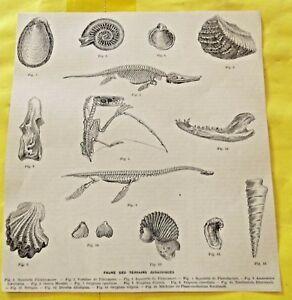 1898 Faune des Terrains JURASSIQUES plésiosaure ptérodactyle old map impression