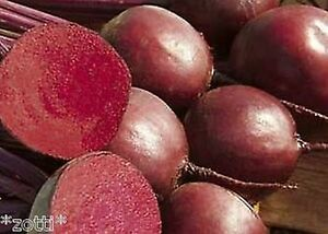 Red Beetroot - Red Ball 2 - beta Vulgaris Var. Vulgaris 50 Piece/100 Piece