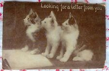 Vintage 1911 Real Photo Postcard of 3 Cats Looking for a Letter From You