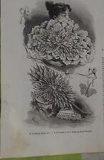 1891 Gravure Ancienne le Moniteur de la Mode Éventail à la pensée