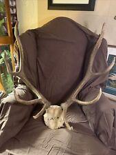 Elk Antlers 2.7' Tall 2.4' Wide Vintage Early 2000s