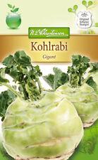 3x Kohlrabi 'Gigant' - Brassica oleracea, Kohl, ca. 200 Samen, MHD 01/2019