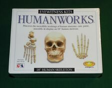 "Eyewitness Kit Humanworks - 18"" Human Skeleton NIB"