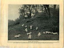 1930 Book Plate Print Sealyham Dog Australian Terrier Maria Habig Mesrity Mucky