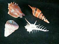 Lot of 4 Assorted Sea Shells Various Types and Colors 2 to 4 inches ~ Unique