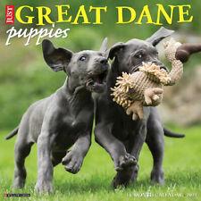 Just Great Dane Puppies (dog breed calendar) 2021 Wall Calendar (Free Shipping)