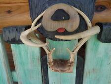 7 Point Pt Whitetail Deer Antlers Rack - Nice Shape
