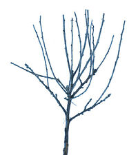 25 Miniature Model Trees N Scale Sagebrush Tree Armatures, Train Layout Scenery