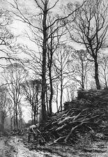 MAN GETS CABIN FIREWOOD IN DARK WINTER FOREST ~ Old 1883 Art Print Etching RARE!