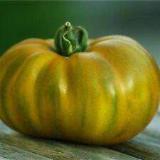 graines de tomate evergreen vendu en sachet de 30 graines