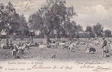 CARTOLINA SICILIA- COSTUMI  SICILIANI, AL PASCOLO - V1904