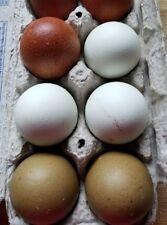 6 Easter hatching eggs, Ameraucana, Olive Egger, cream legbar, sapphire