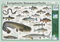 """Bio-Poster """"Europäische Süsswasserfische"""""""