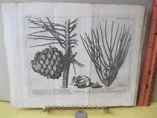 Vintage Print,PINE TREE,Spectacle de la Nature,1736,Pl 15