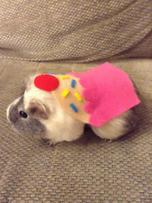 Guinea pig costume- Cupcake. Small pet costume