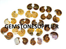 10 Matched Pair 100%Natural Fossilized Ammonite Cabochon Gemstone Wholesale Lot