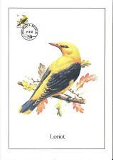 FDC 2476 - Oiseau Buzin sur gravure format A4 !
