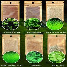Live Aquarium Plants Aquatic Water Grass Plant Seeds Fish Tank Decor Moss Mesh